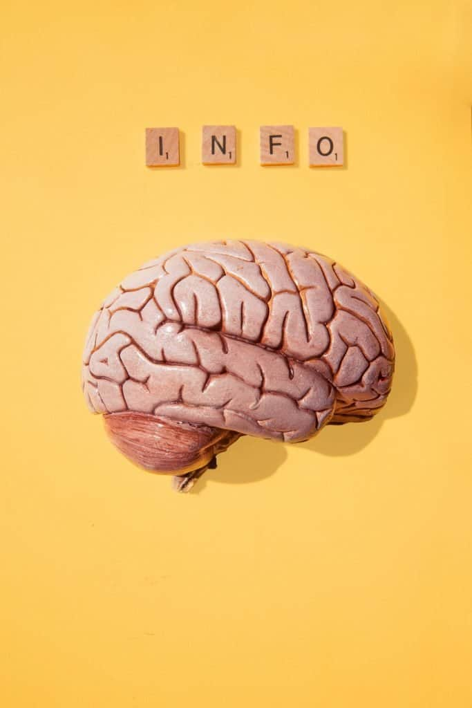 NLP brain processing information