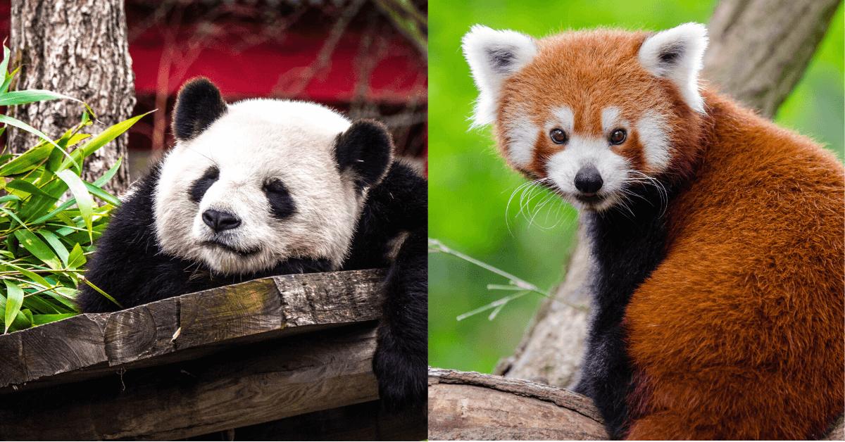 pandas groupby two types of pandas