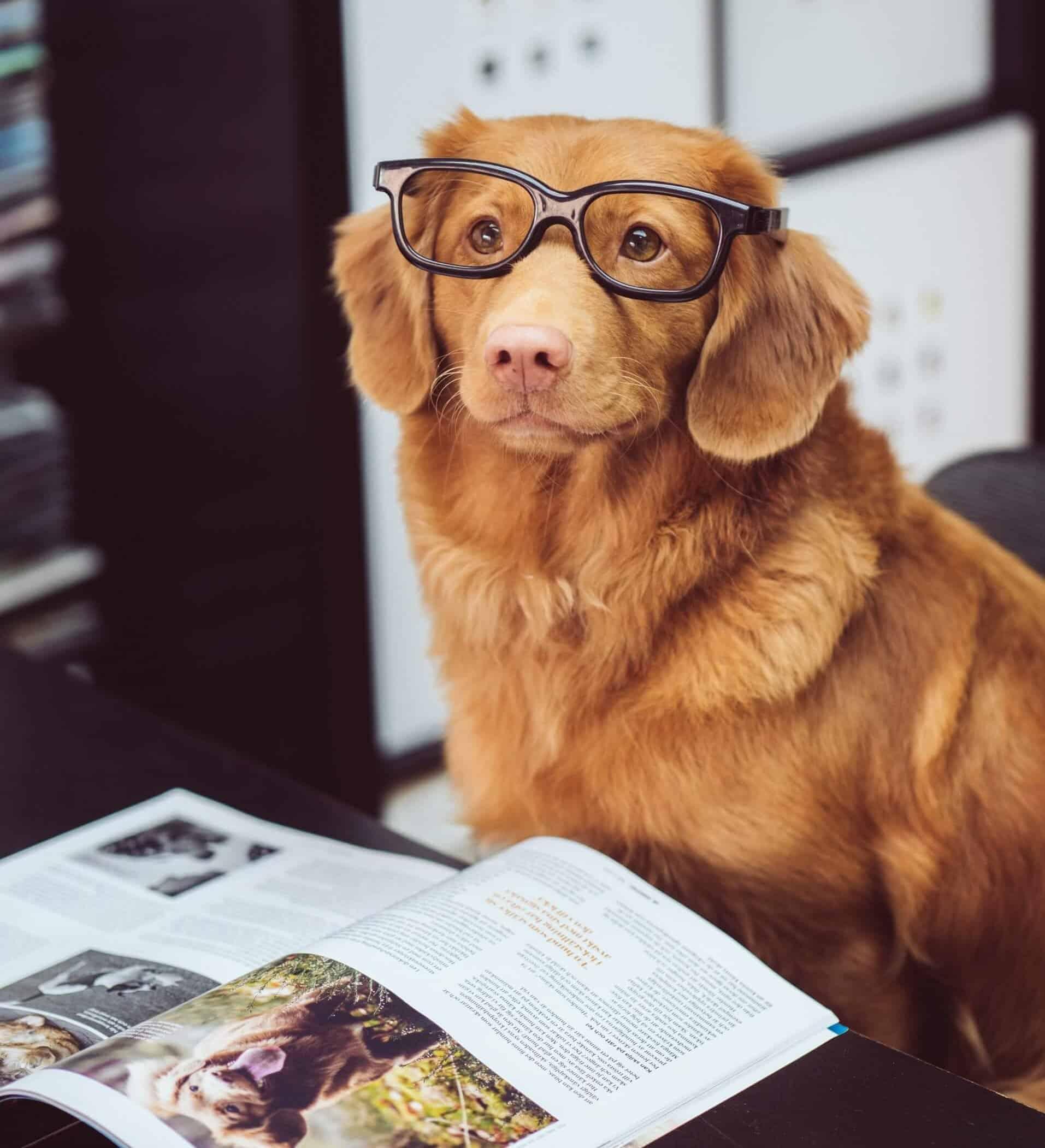 pandas read_csv tutorial dog reading