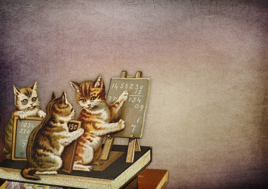learn statistics for data science cats tutorial