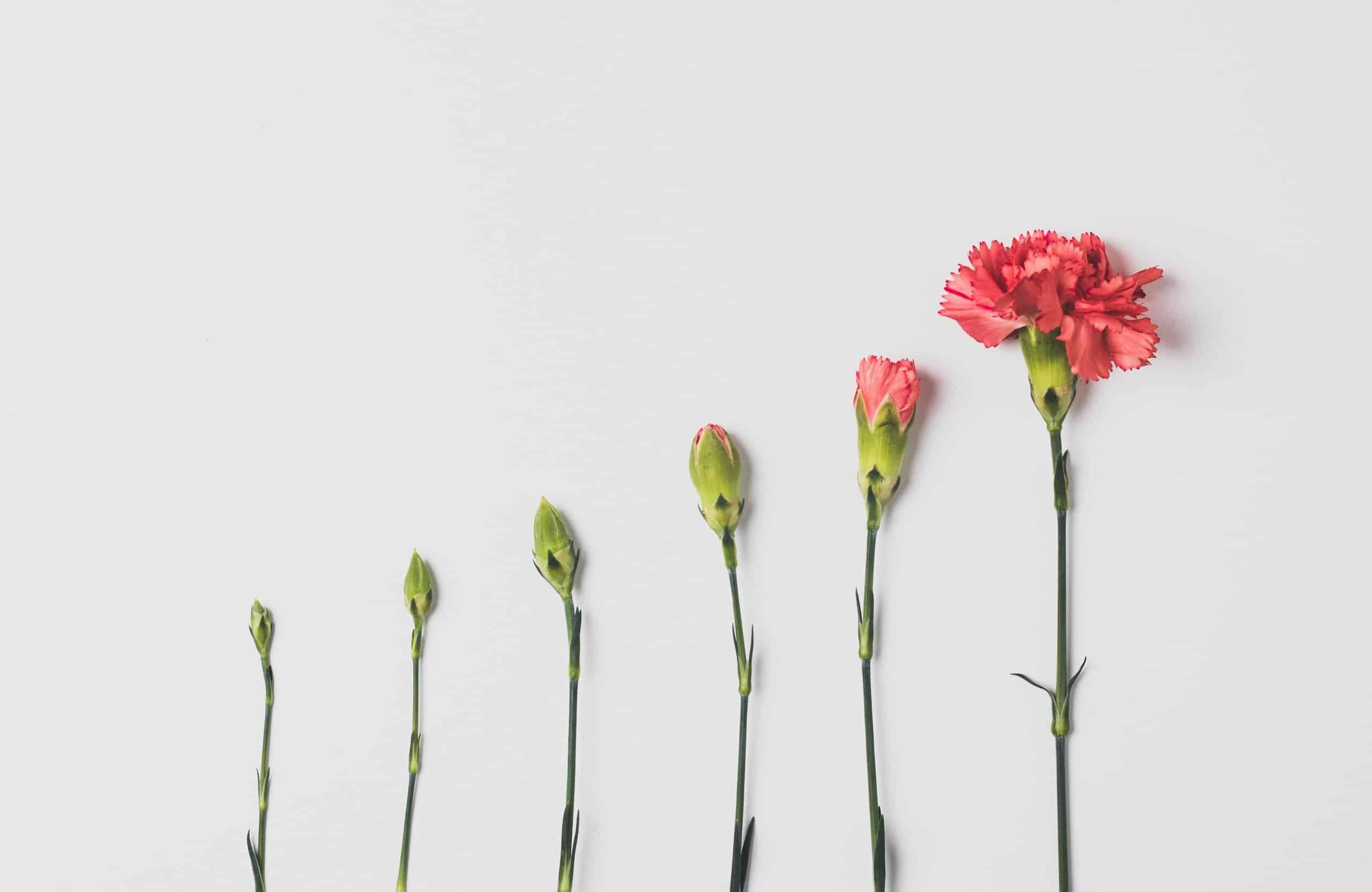 plotly python tutorial graph flower