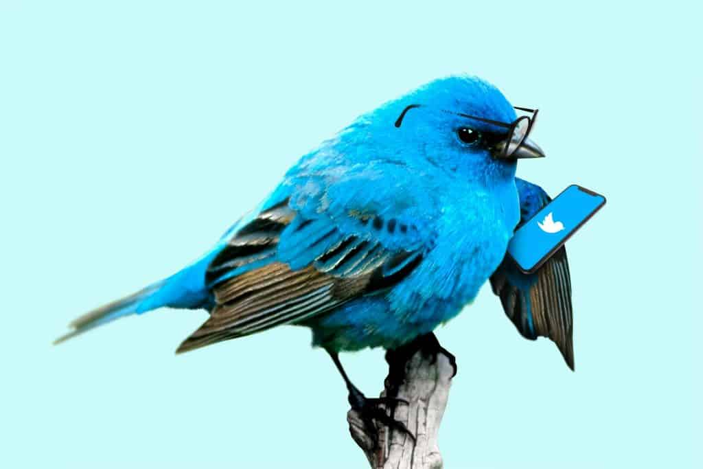 twitter sentiment analysis python bird